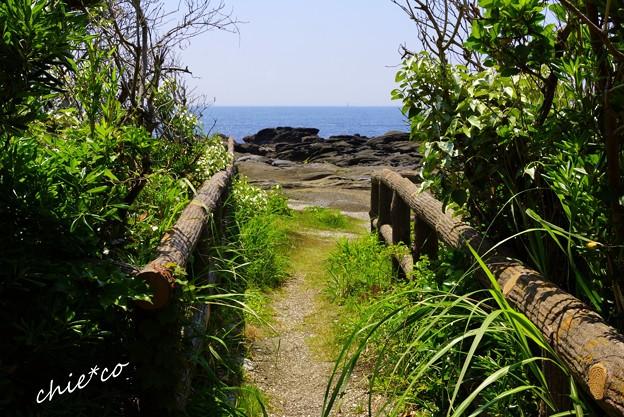 天神島臨海自然教育園-012