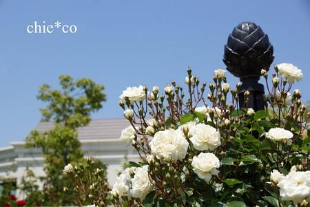 横浜 English Garden-197