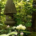 写真: 鎌倉長谷-067