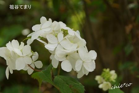 鎌倉長谷-074