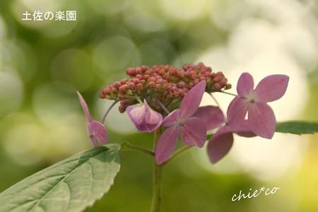 鎌倉長谷-084