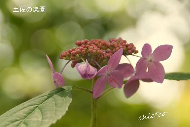 写真: 鎌倉長谷-084