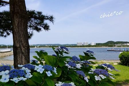 八景島-035