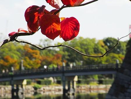 紅く染まったハナミズキの葉と・・・