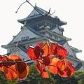 はじめまして~♪ 大阪城・・