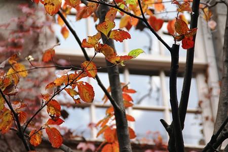 窓・・・  初冬の横浜スケッチ