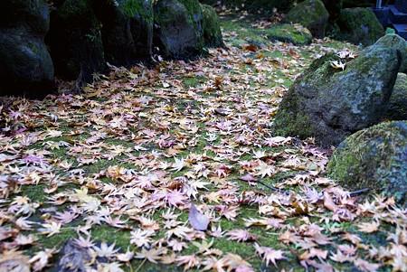 落ち葉の径