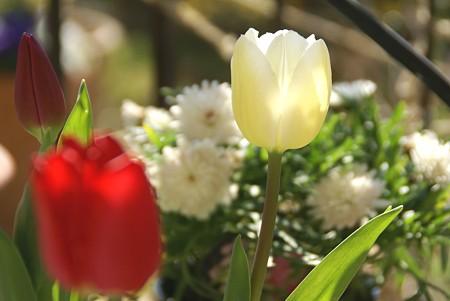 春花壇・・先取り気分~♪