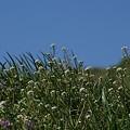 写真: 春の野原~~♪