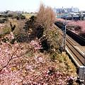 写真: 桜咲く風景・・