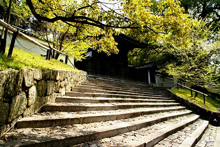京都 桜さんぽ 16