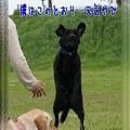 Photos: 元気