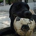 Photos: 大好きなボール遊び