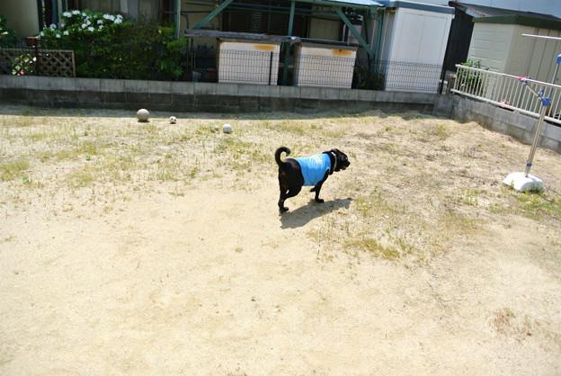 Photos: 庭、広~~~!!!