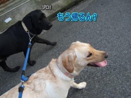 8-7散歩6