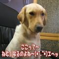 Photos: 紫音6