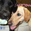 Photos: 取り合い5