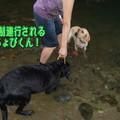 Photos: 川遊び  強制連行