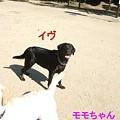 Photos: イヴ