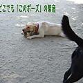 Photos: ポーズ