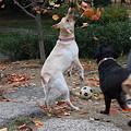 Photos: 秋だね~~  (葉を食う犬)