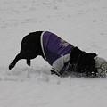 Photos: 雪の中のサッカー
