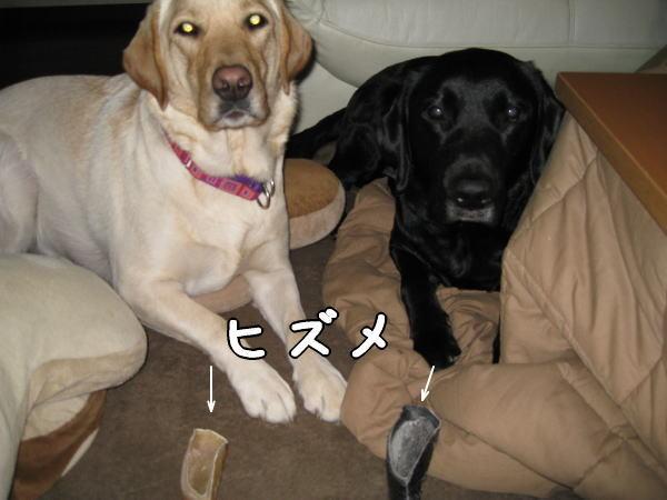 Photos: ヒズメ