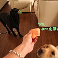Photos: ぶ~太郎投入