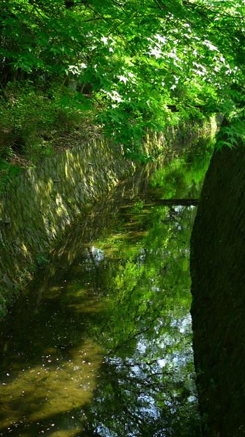 水面の新緑