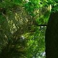 Photos: 水面の新緑