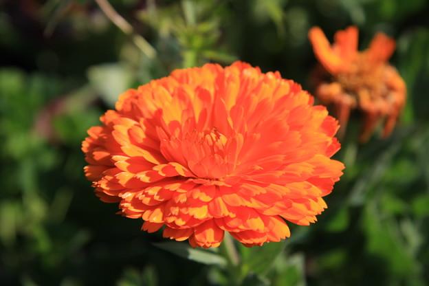 橙色の花?なんの花?