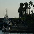 写真: 逗子の漁港0831