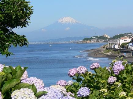 アジサイと富士山0616tc