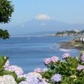 Photos: アジサイと富士山0616tc