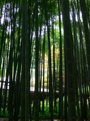 報国寺竹の庭0803ta