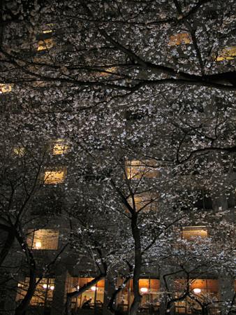 夜桜ホテル前0327tx