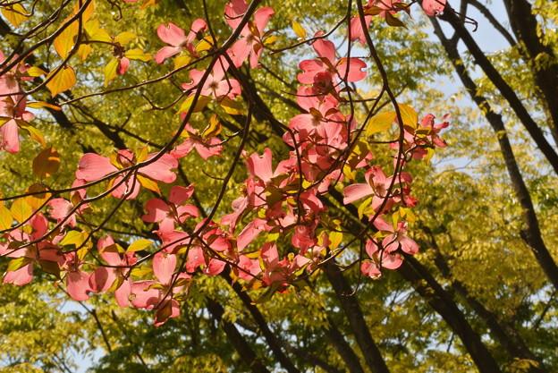 写真: 昭和記念公園散歩(2)