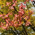 昭和記念公園散歩(2)