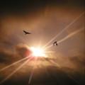 写真: 朝日の好きなカラス P9094837b