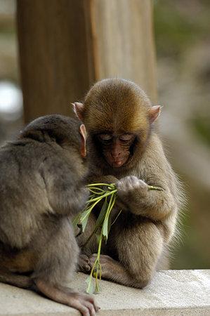 小猿(3)