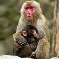親子猿(2)