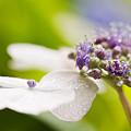 写真: 優しい花