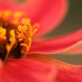 写真: 花の鍵
