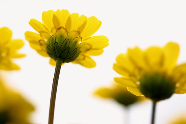 写真: 逆黄