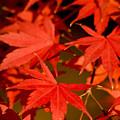 Photos: 砧公園の紅葉