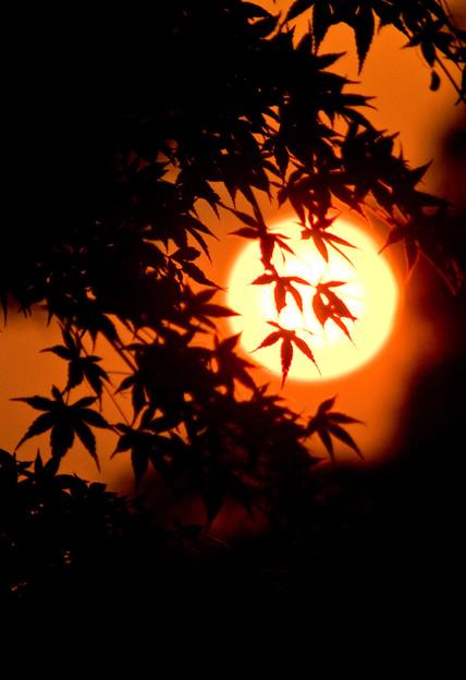 夕焼けの中の紅葉