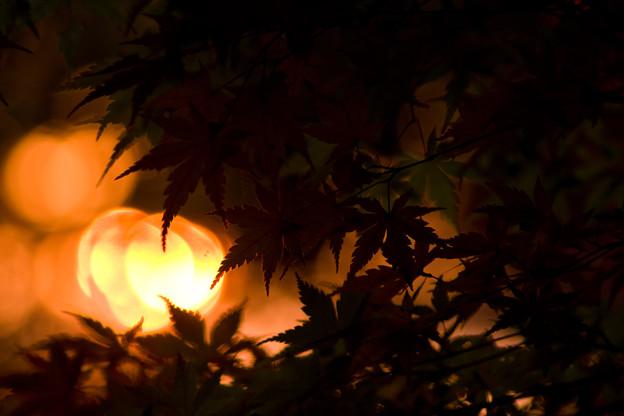 Photos: 夕暮れの紅葉