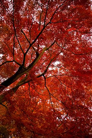 広角いっぱいの紅葉