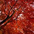 Photos: 広角いっぱいの紅葉