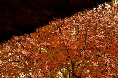 藁葺き屋根と紅葉